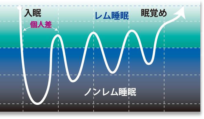 睡眠の周期図