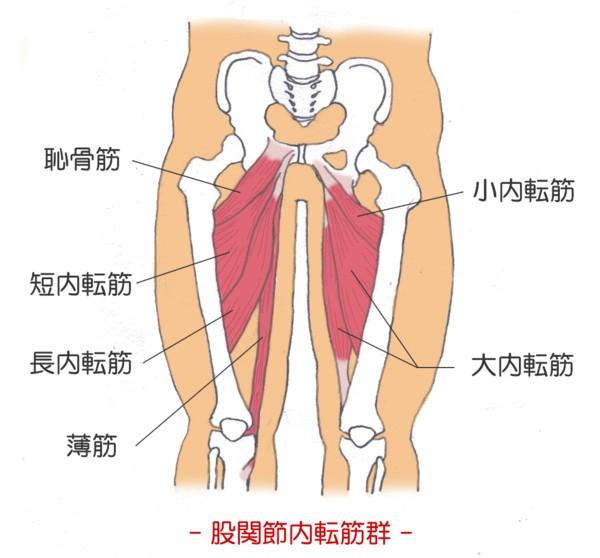 最短で柔軟性を高める効果的な股...