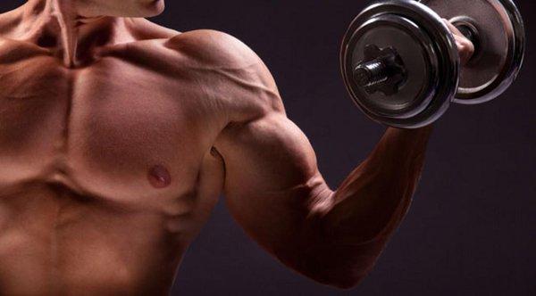 上半身筋肉