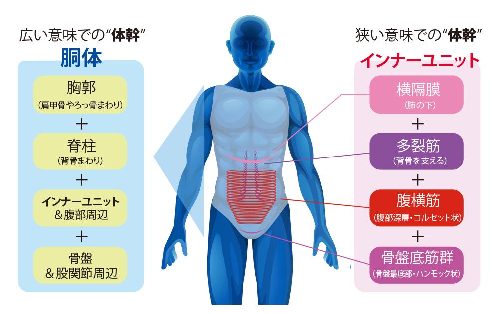 体幹のイメージ画像