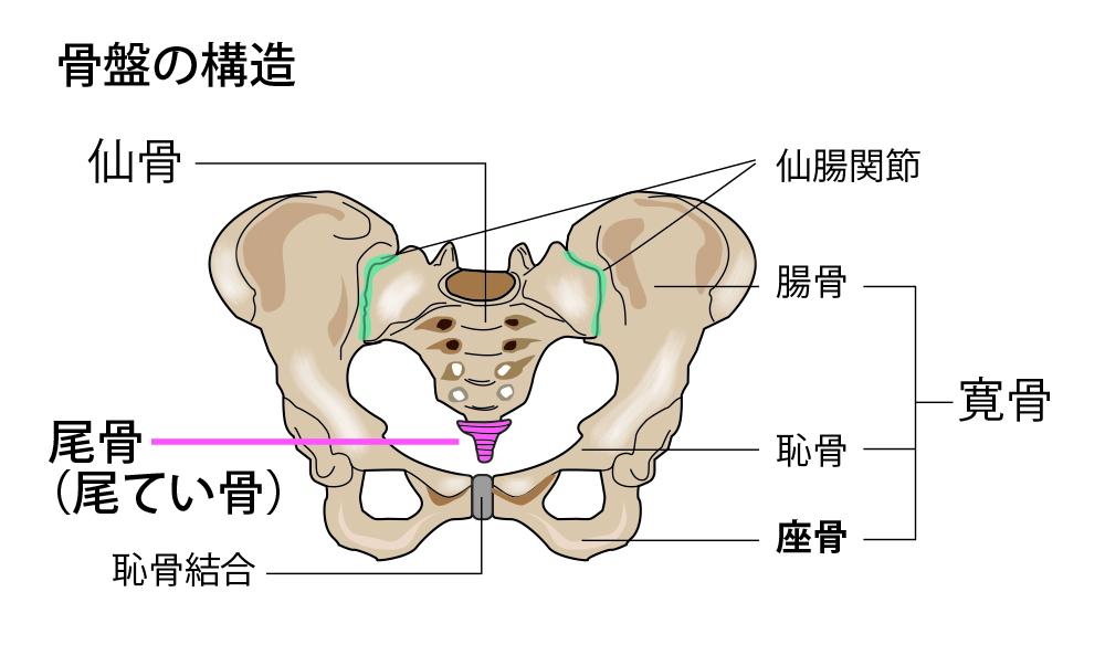 尾骨の位置