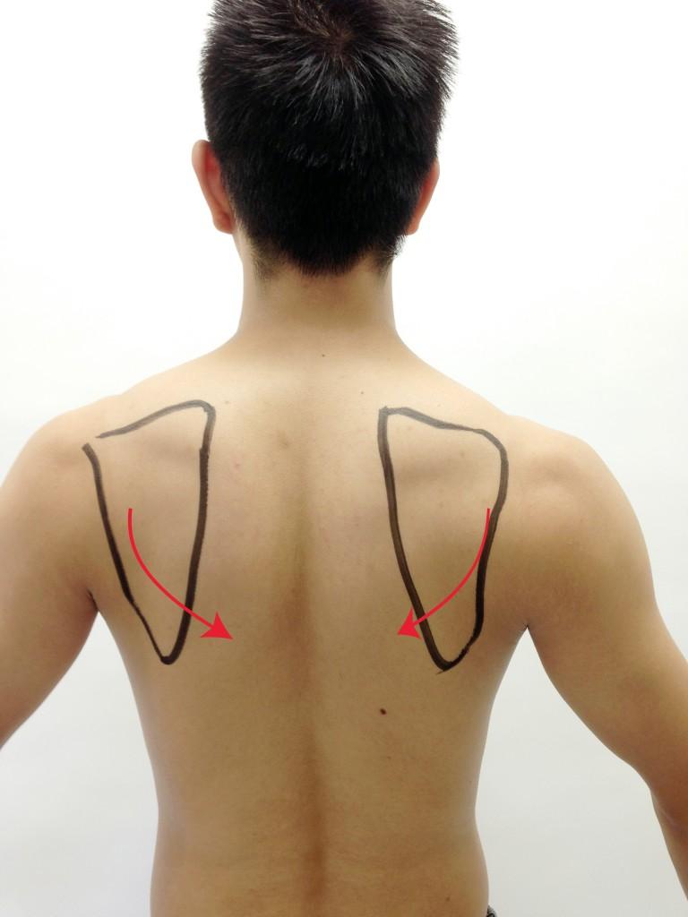 肩甲骨下方回旋
