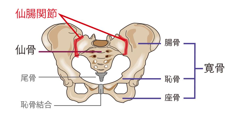 仙腸関節障害