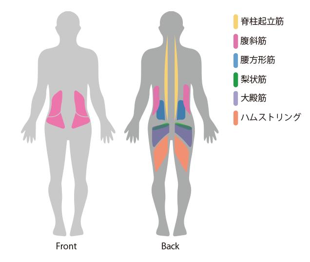 腰痛に関係する筋肉