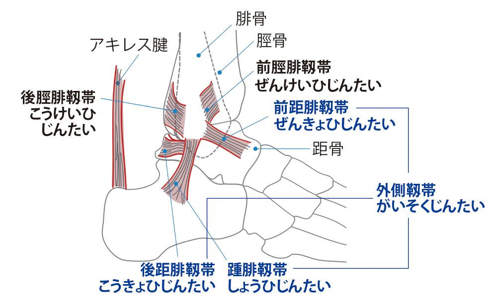 足首の靭帯
