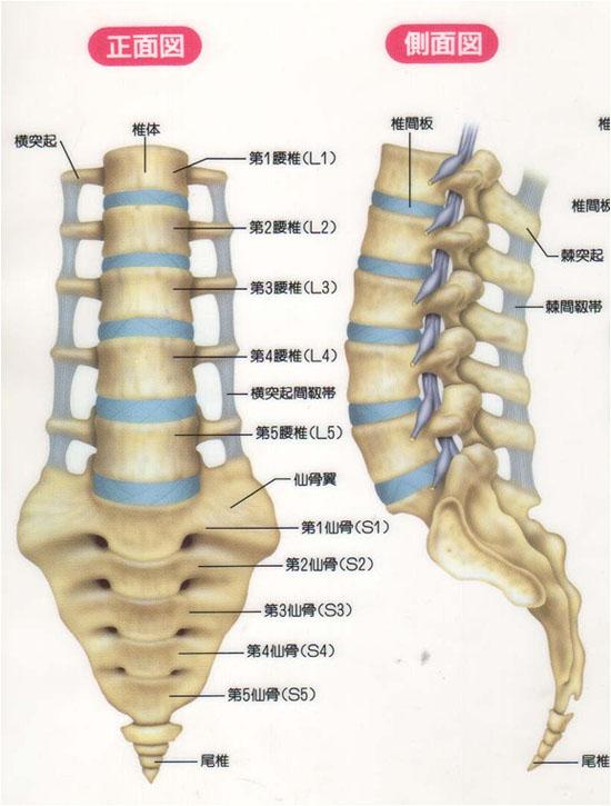 坐骨神経痛の代表的な10の症状と5大原因、治療&対処法の全知識