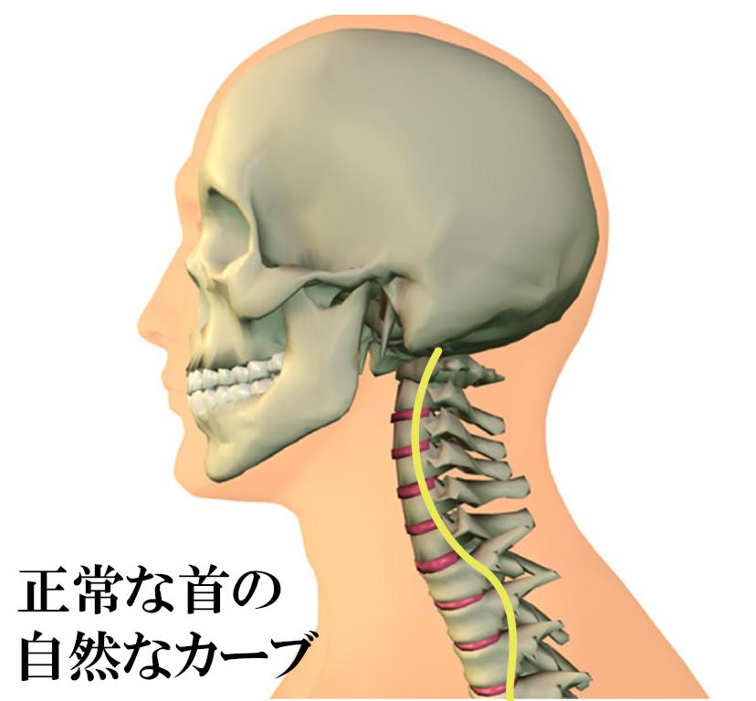 正常な首は自然なカーブを描いています。
