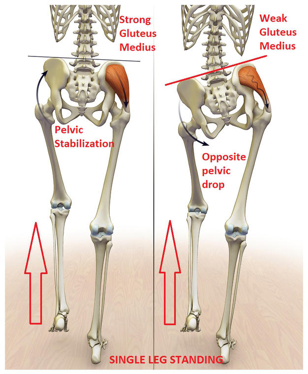 action of gluteus medius