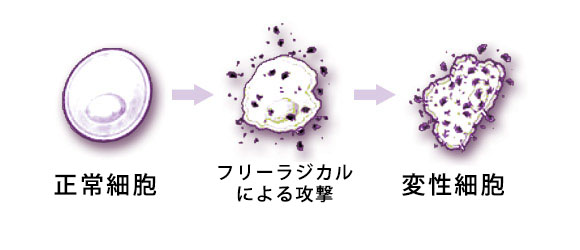 cell-process