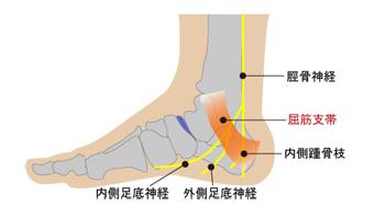 内側にある屈筋支帯