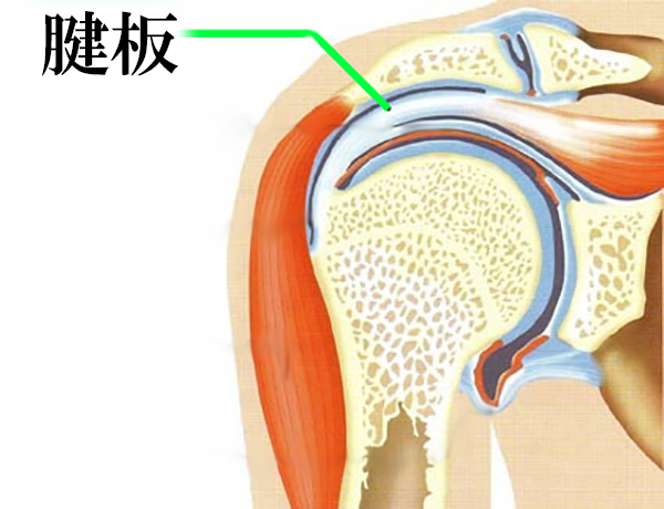 痛い 筋 トレ 肩
