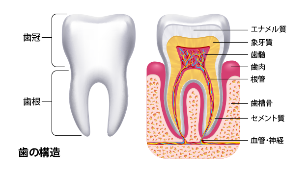 Tooth-structure