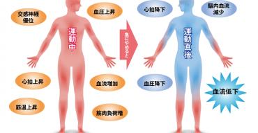 運動中と直後の身体変化