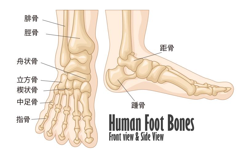 footbones