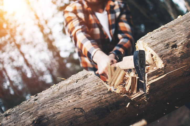 Strong logger in a plaid shirt chopping a big tree. Wood chips fly apart
